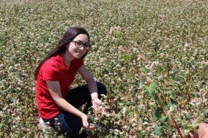 Çankırı'nın Karabuğdayı yurtdışına ihraç ediliyor